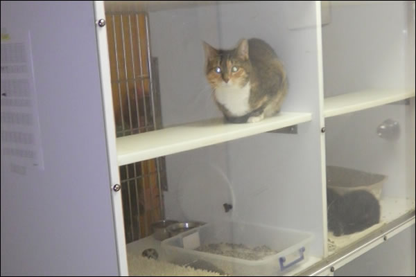 cat-boarding-office-tour-animal-clinic-of-ava